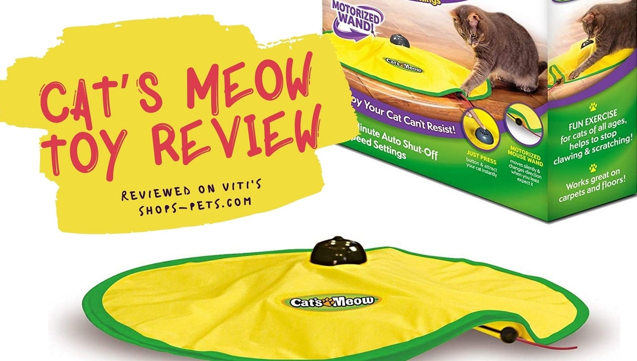 Cat's Meow Toy Review