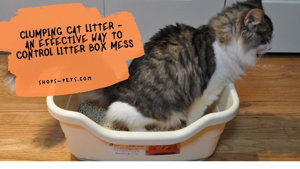 Clumping Cat Litter - An Effective Way To Control Litter Box Mess