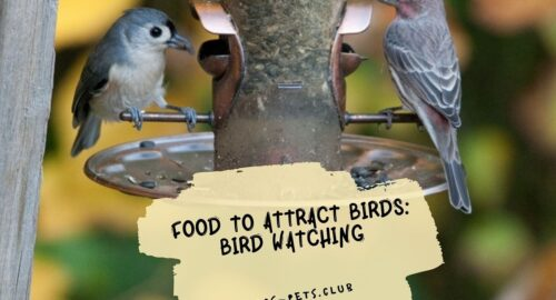Food to Attract Birds: Bird Watching