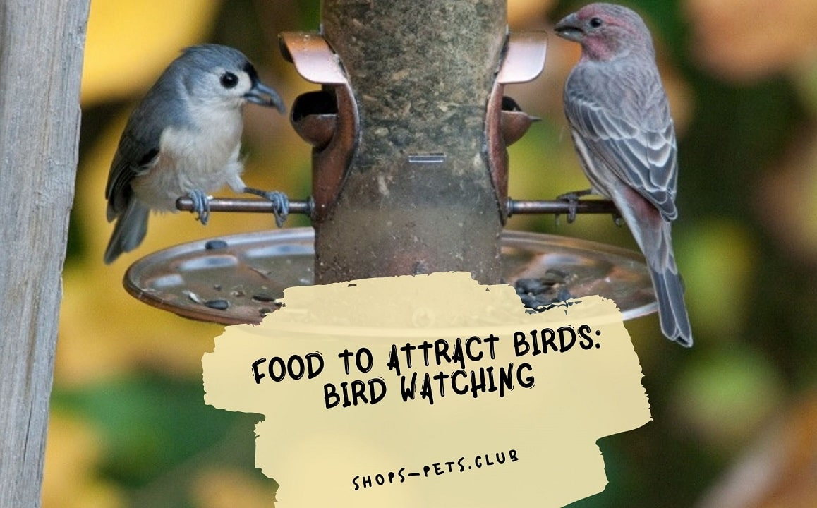 Food to Attract Birds: Bird Watching