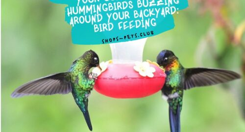 Guide to Getting Hummingbirds Buzzing Around Your Backyard Bird Feeding