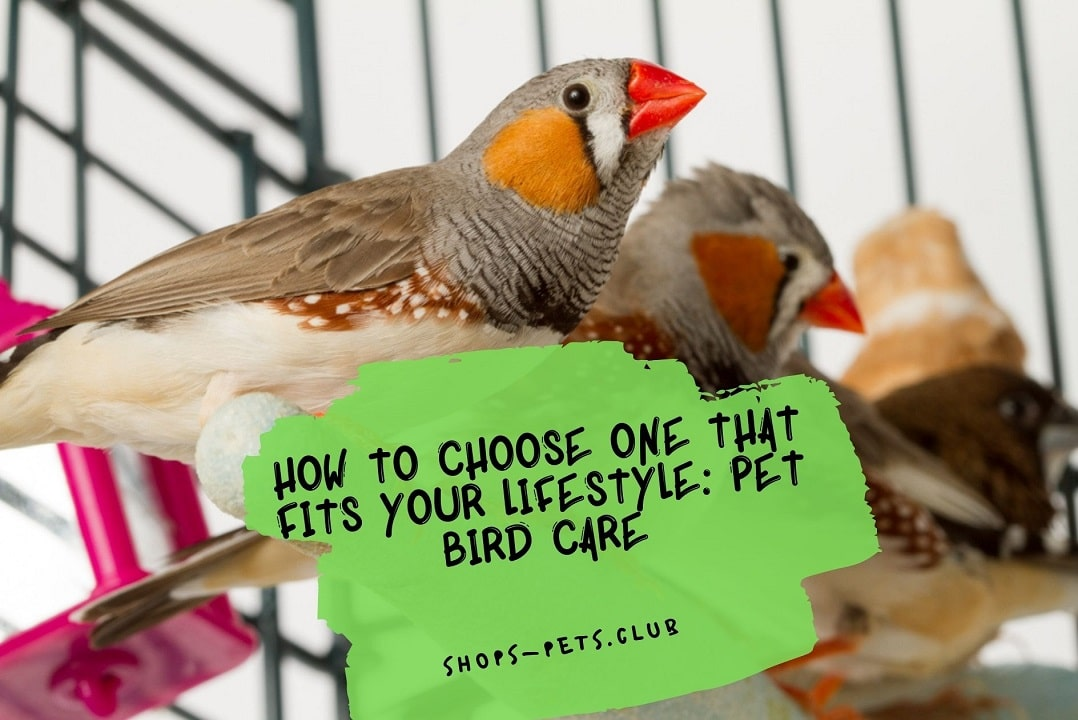 How To Choose One That Fits Your Lifestyle Pet Bird Care