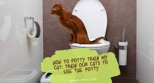How To Potty Train My Cat Train Our Cats to Use the Potty