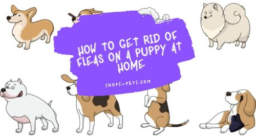 How to Get Rid of Fleas on a Puppy at Home