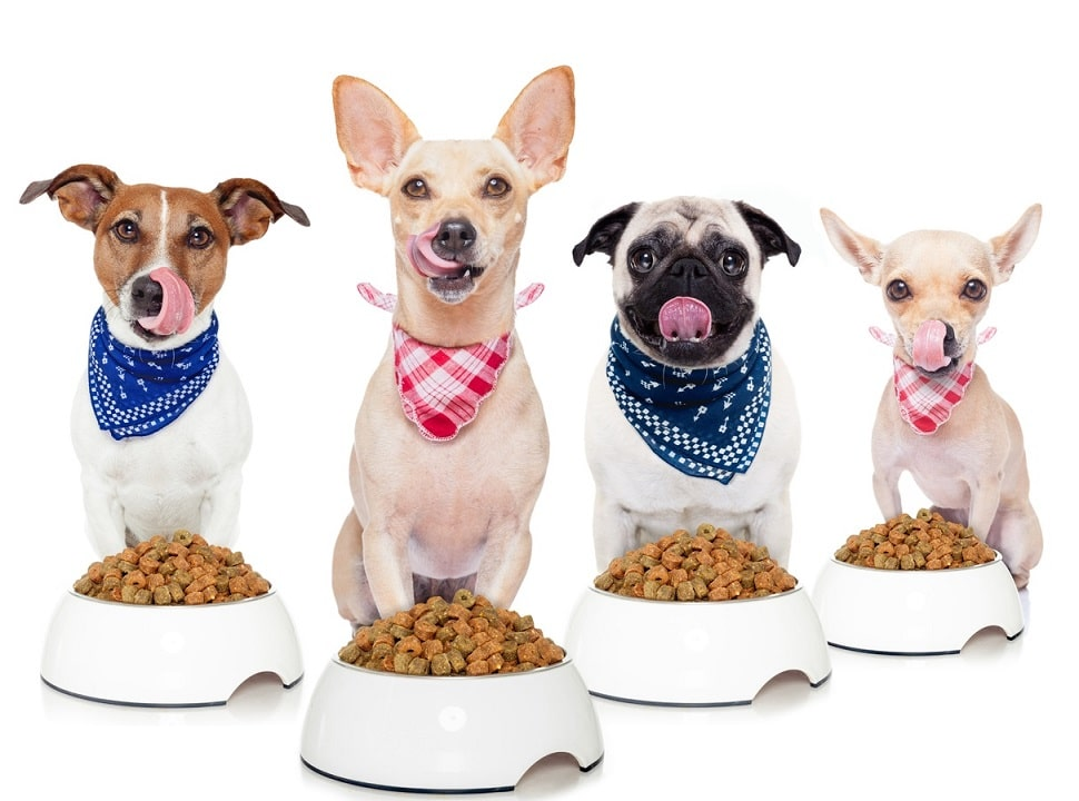 Knowing More on the Most Basic Food Canine Nutrition