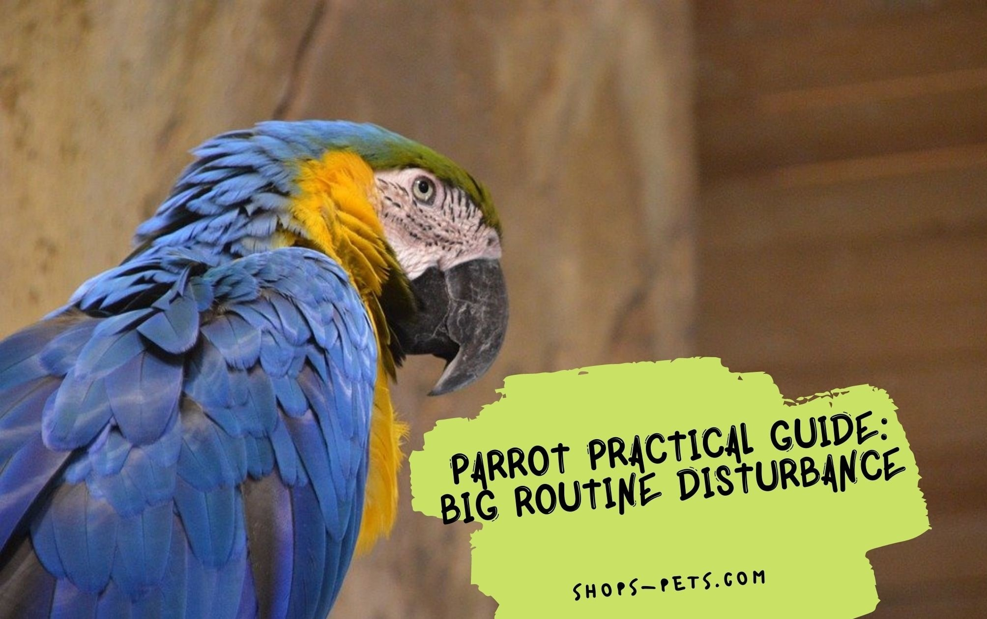 Parrot Practical Guide Big Routine Disturbance