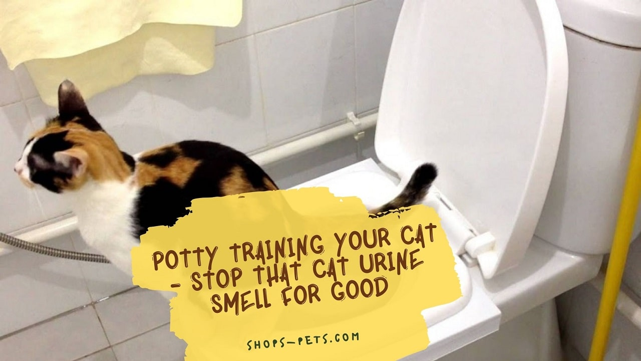 Potty Training Your Cat - Stop That Cat Urine Smell For Good
