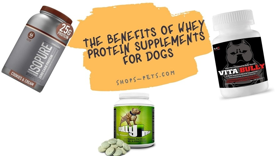 The Benefits Of Whey Protein Supplements For Dogs