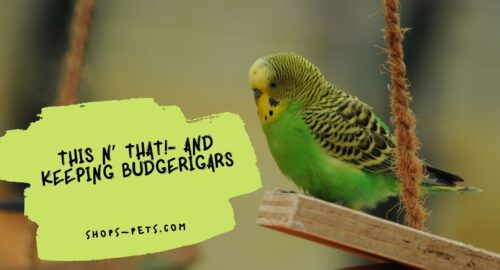 This N' That!- And Keeping Budgerigars