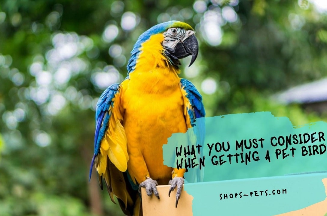 What You Must Consider When Getting A Pet Bird