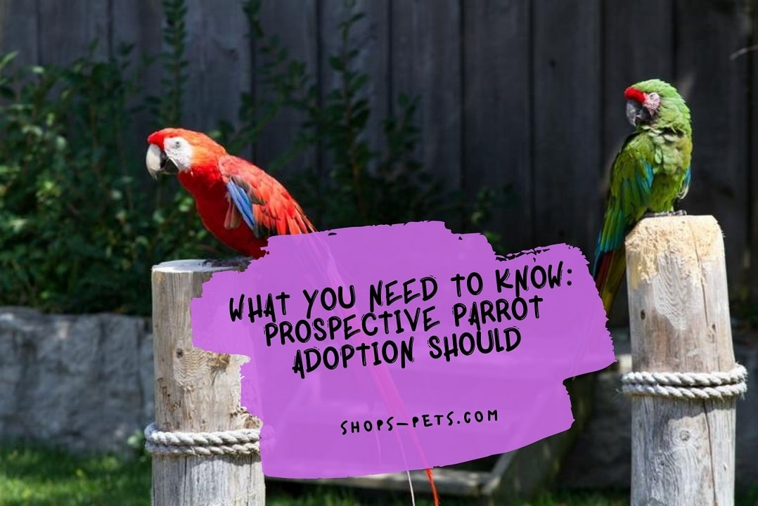 What You Need To Know Prospective Parrot Adoption Should