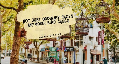 Not Just Ordinary Cages Anymore: Bird Cages