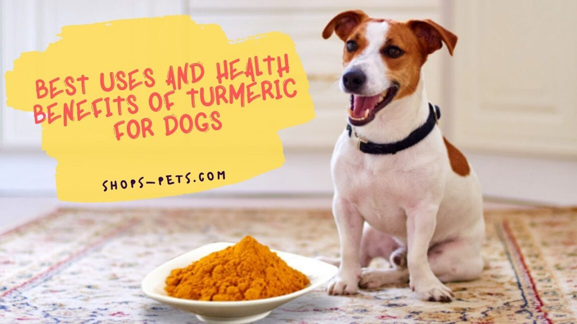 Best Uses and Health Benefits of Turmeric for Dogs