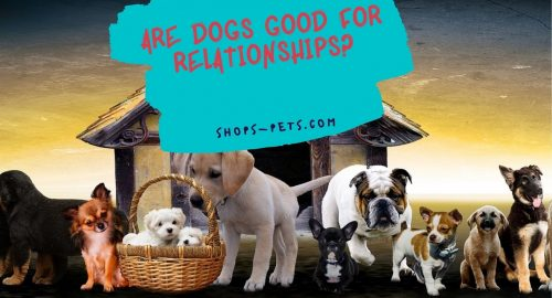 Are Dogs Good for Relationships