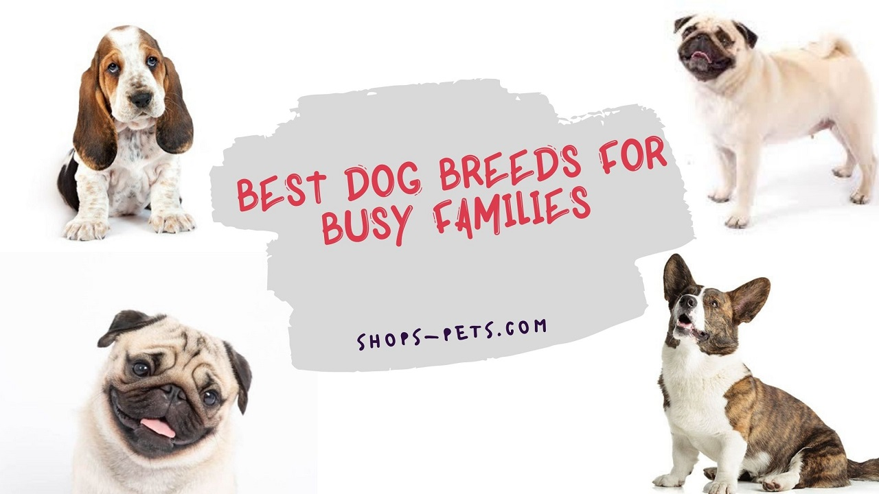 Best Dog Breeds For Busy Families