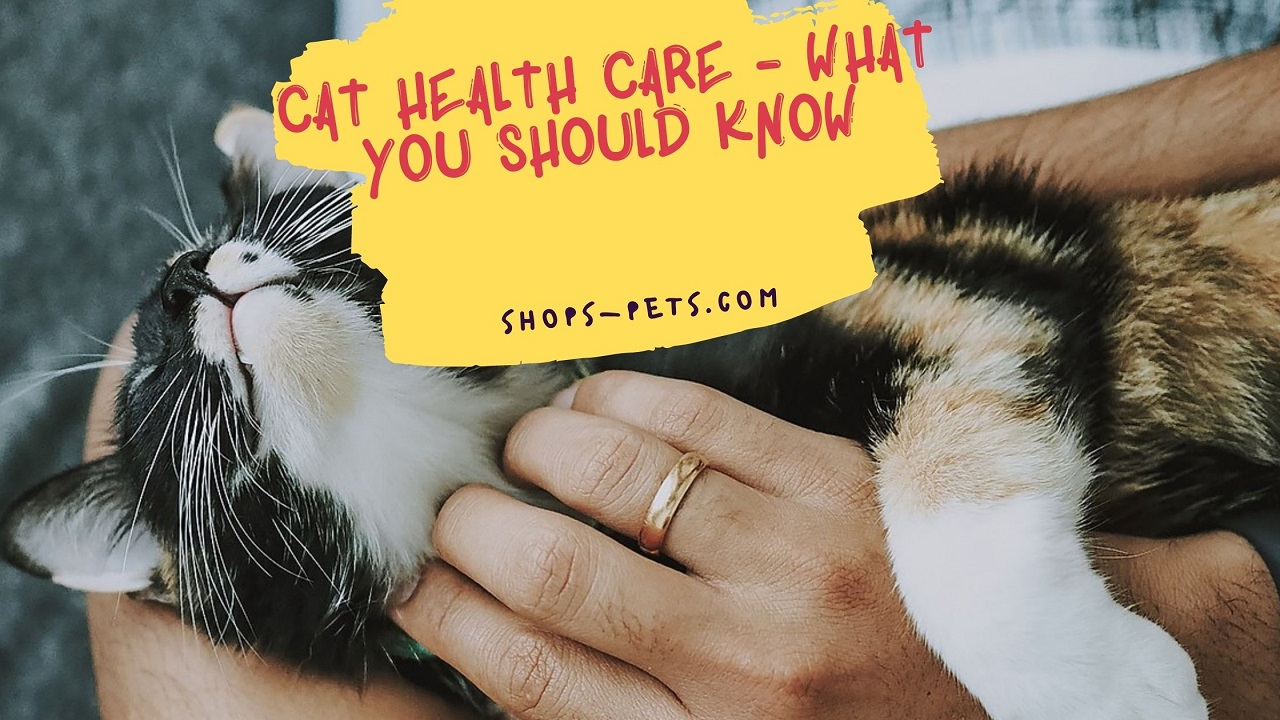 Cat Health Care - What you Should Know