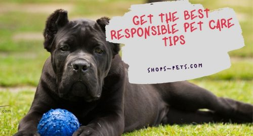 Get the Best Responsible Pet Care Tips