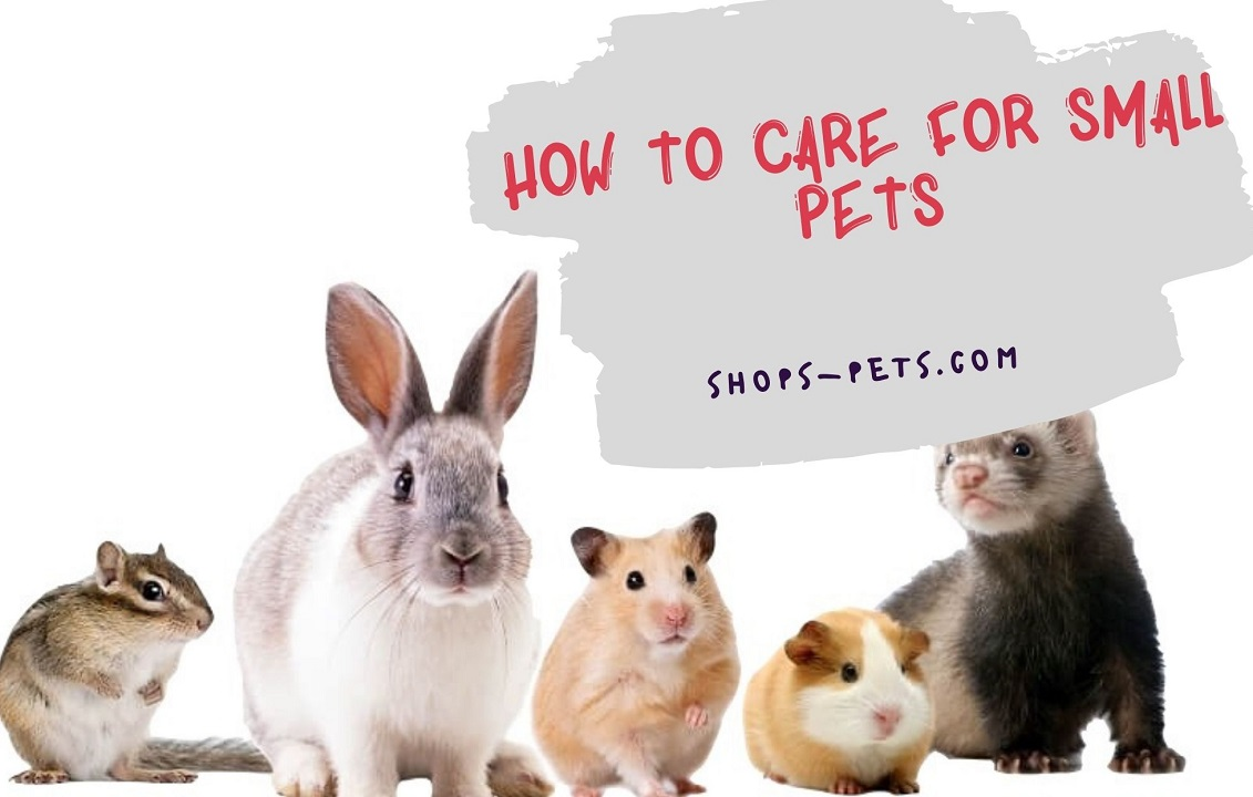 How To Care For Small Pets