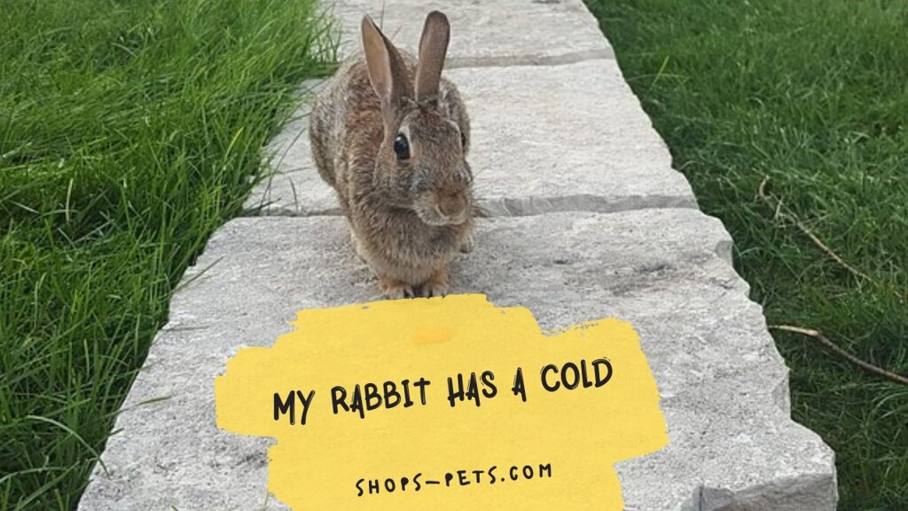 My Rabbit Has a Cold